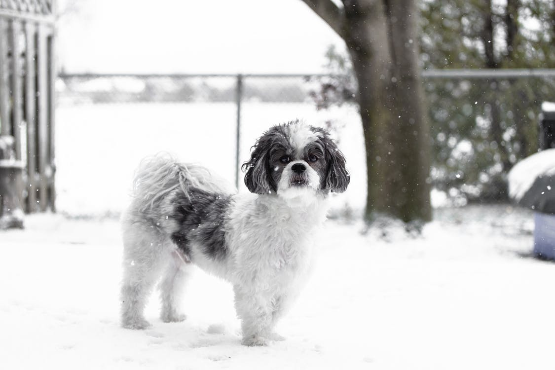 Free stock photo of adorable, animal, black dog