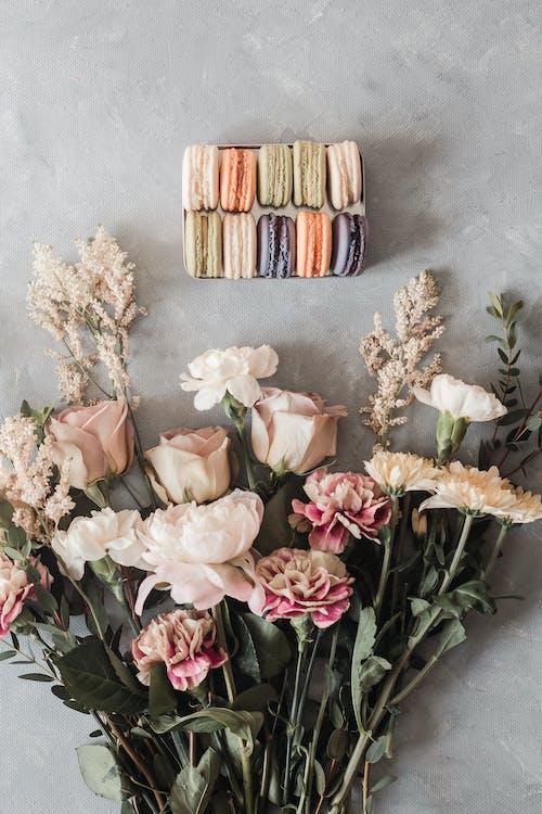 Gratis stockfoto met arrangement, blad, bloem