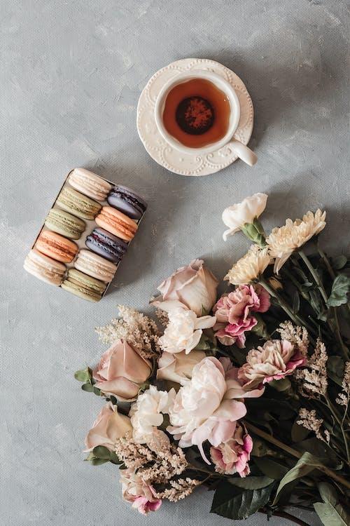Gratis stockfoto met behandeling, blad, bloem