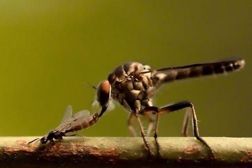 가지, 고요한, 곤충의 무료 스톡 사진