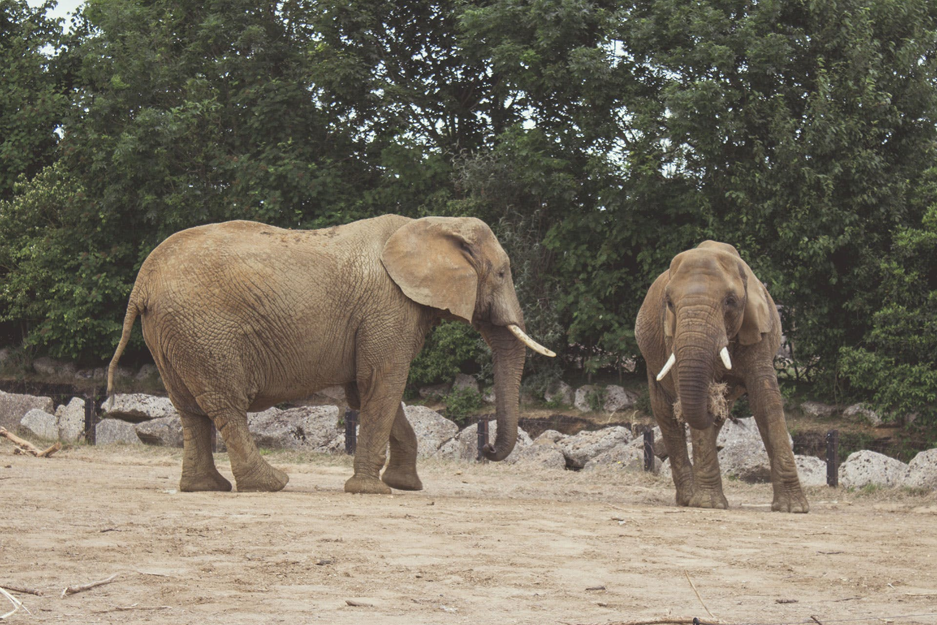 Two Brown Elephants Standing Near Green Trees