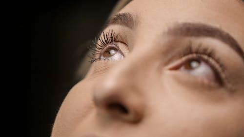特写, 眉毛, 眼光 的 免费素材图片