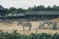 africa, animals, zoo