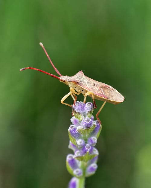Shallow Focus Photo of a Bug on a Purple Flower