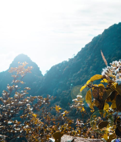 Gratis lagerfoto af bjerge, blade, blomster, dagslys