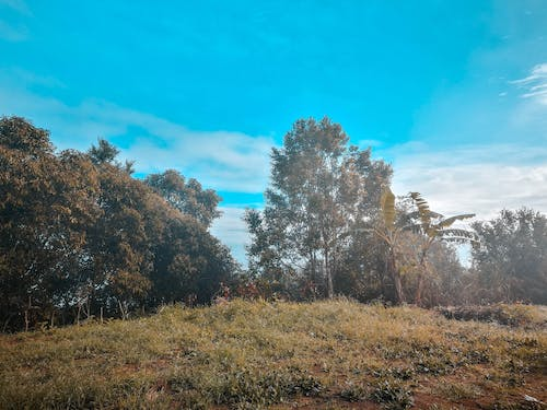 Free stock photo of blue, daytime, green