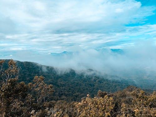 Kostenloses Stock Foto zu bäume, berge, grün, hoch