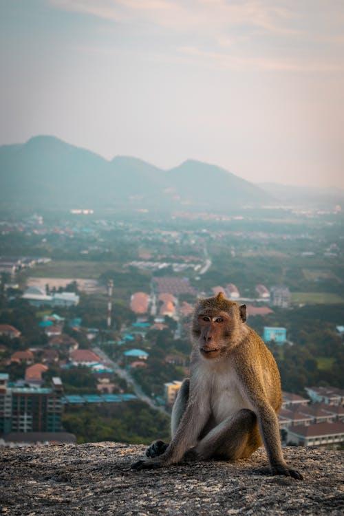 哺乳動物, 城市, 城鎮 的 免费素材图片