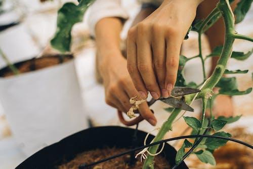 Immagine gratuita di al lavoro, amante delle piante, dito