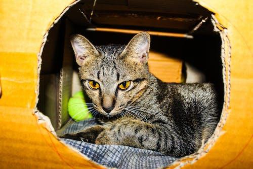 Imagine de stoc gratuită din adorabil, animal, animal de casă, animal de companie