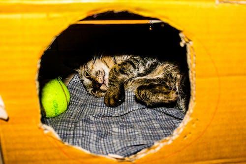 Fotobanka sbezplatnými fotkami na tému cicavec, čistokrvný, detailný záber, domáce zviera