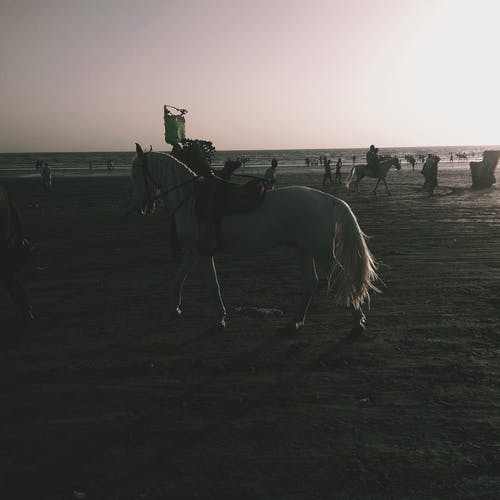 Free stock photo of horse, sand, sea