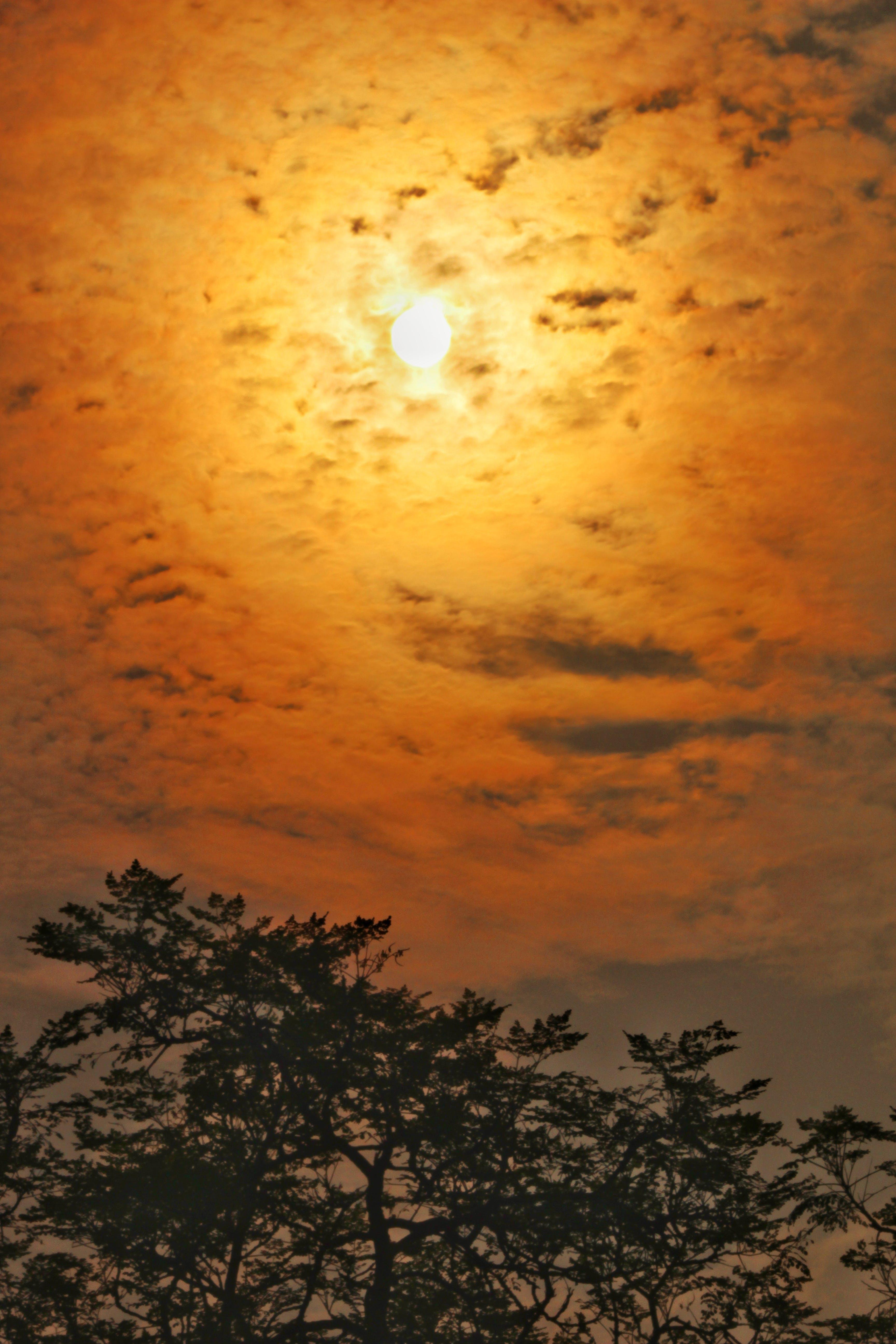 Kostnadsfri bild av Solstrålar