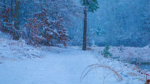 Fotos de stock gratuitas de agua, agua de la nieve, árbol de nieve, árbol frío
