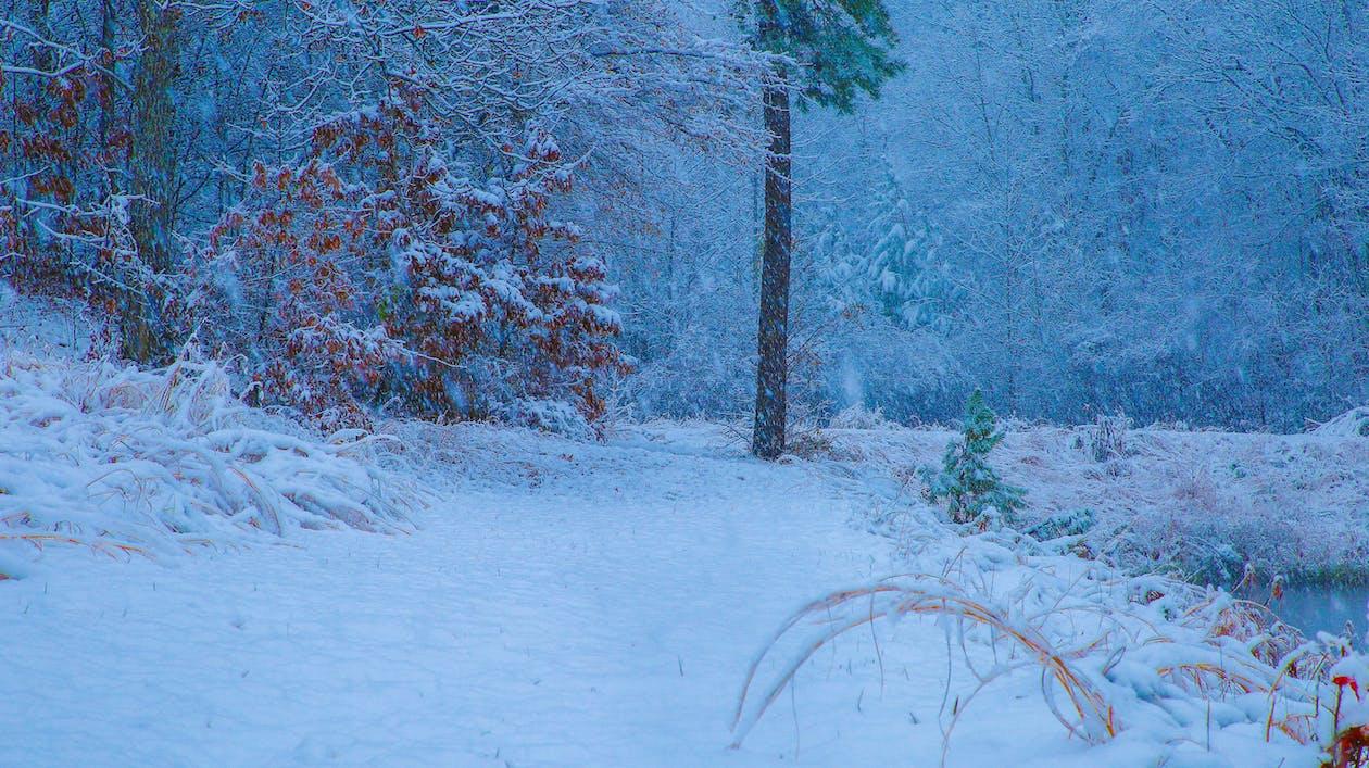 agua, agua de la nieve, árbol de nieve