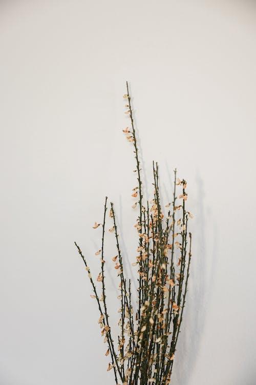 Ảnh lưu trữ miễn phí về bắn dọc, cái bình hoa, cây