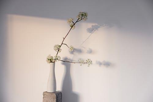 Foto profissional grátis de caules, cerasus, flores