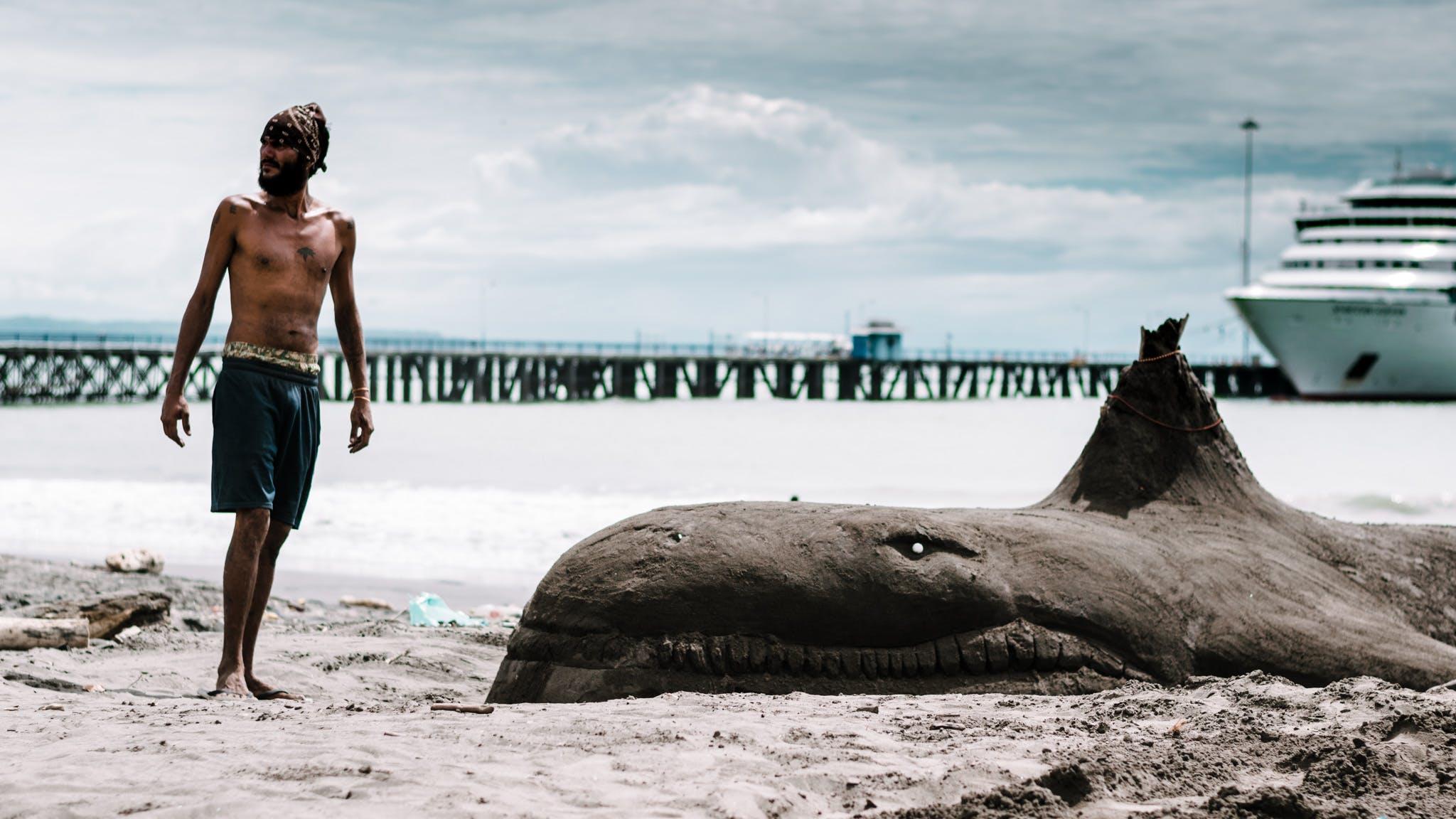 Free stock photo of beach, whale