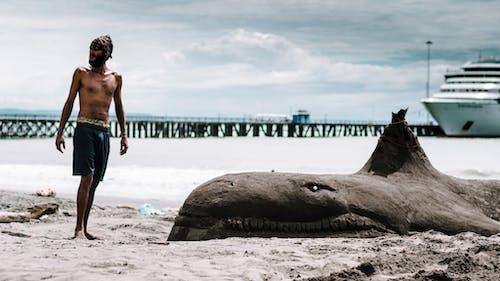 クジラ, ビーチの無料の写真素材