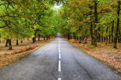 Darmowe zdjęcie z galerii z asfalt, droga, drzewa, kolory