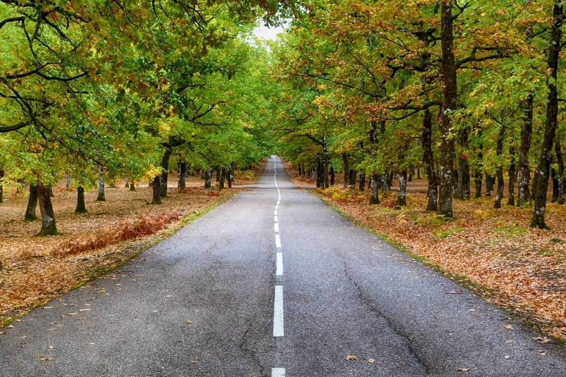 a pagès, arbres, asfalt
