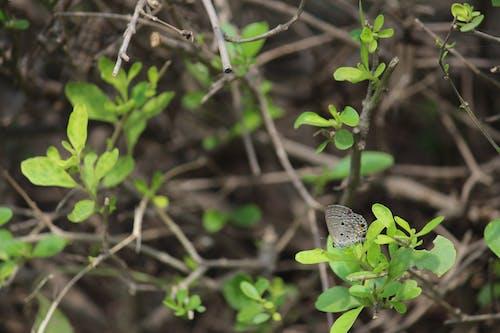 Kostenloses Stock Foto zu schmetterling, schmetterling auf einer blume, wildpflanze