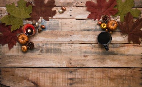Δωρεάν στοκ φωτογραφιών με vintage, αναψυκτικό, βελανίδια, δέντρο