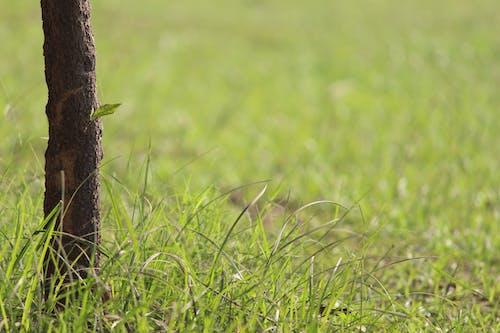Kostenloses Stock Foto zu gras, grashalm, grünes gras, nasses gras