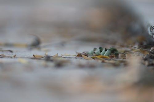 Kostenloses Stock Foto zu gefallene blätter, natur wallpaper, trockene blätter, verschwimmen