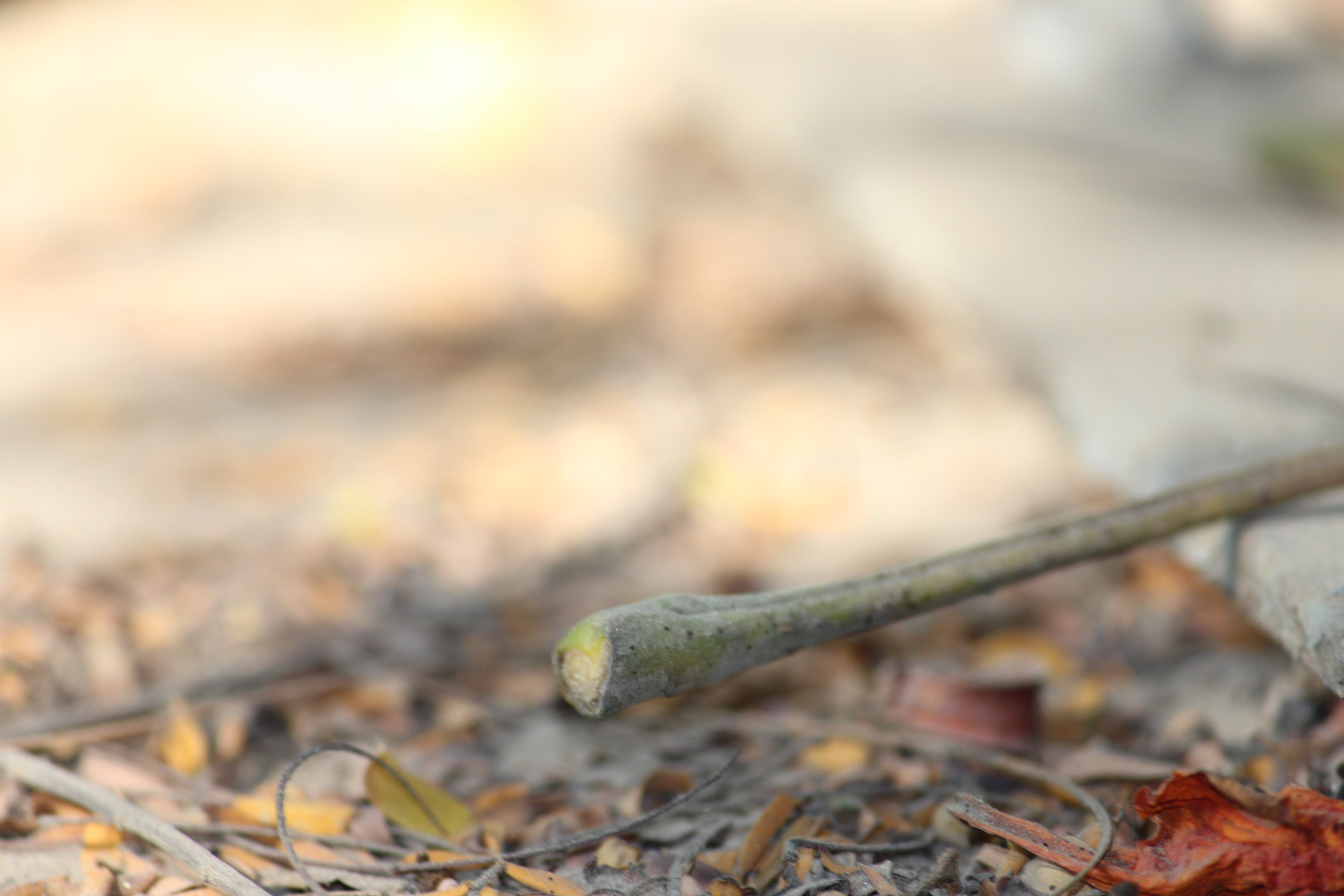 Free stock photo of autumn leaves, blur, dry leaves, fallen leaves