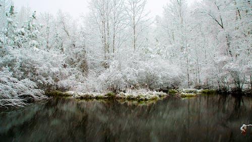 Fotos de stock gratuitas de agua de la nieve, árbol de invierno, árbol de nieve, árbol frío