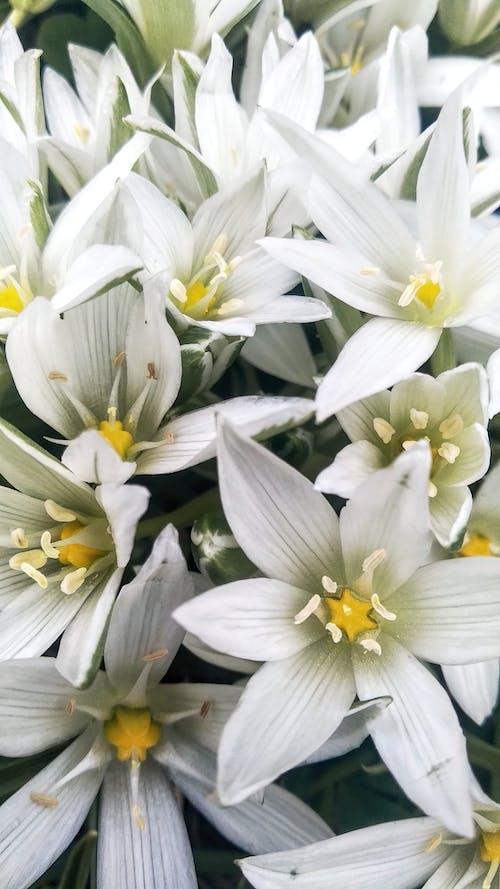 Free stock photo of bloom, blooming, blooming flowers