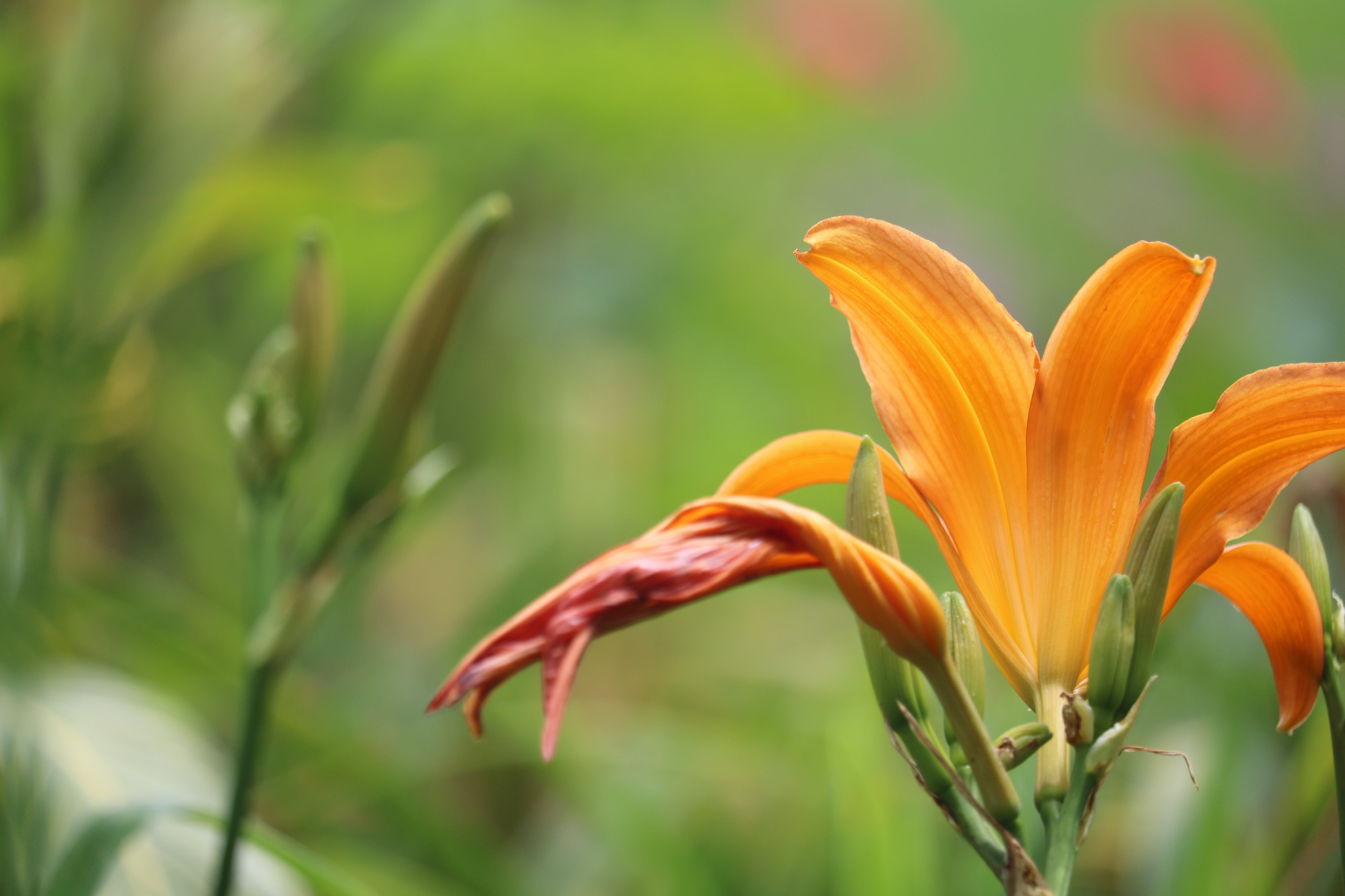 Close-up Photo of Orange Petal Flower