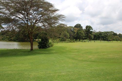 高爾夫球場 的 免费素材照片