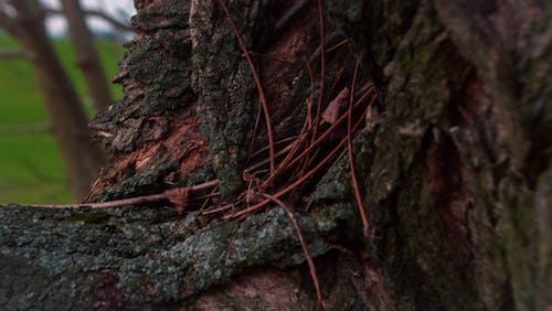 冒険, 木, 森林, 赤の無料の写真素材