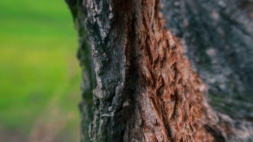 冒険, 木, 森林, 緑の無料の写真素材