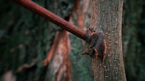 冒険, 木, 森林の無料の写真素材