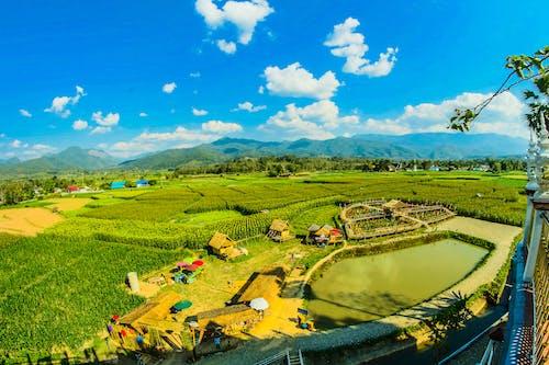 Gratis stockfoto met achtergrond, akkerland, aziatisch, Azië