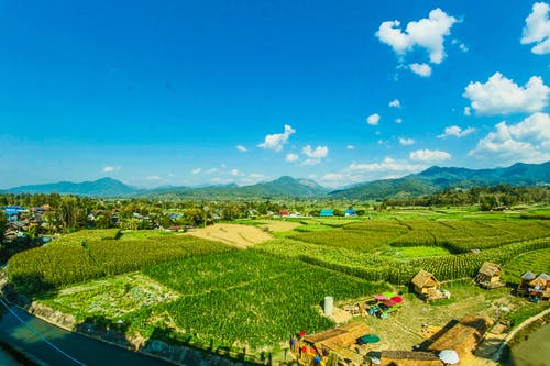 Houses Near the Rice Wheat Field Under the Clear Blue Skies
