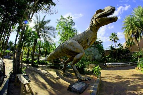 Darmowe zdjęcie z galerii z architektura, badania, cień, dinozaur