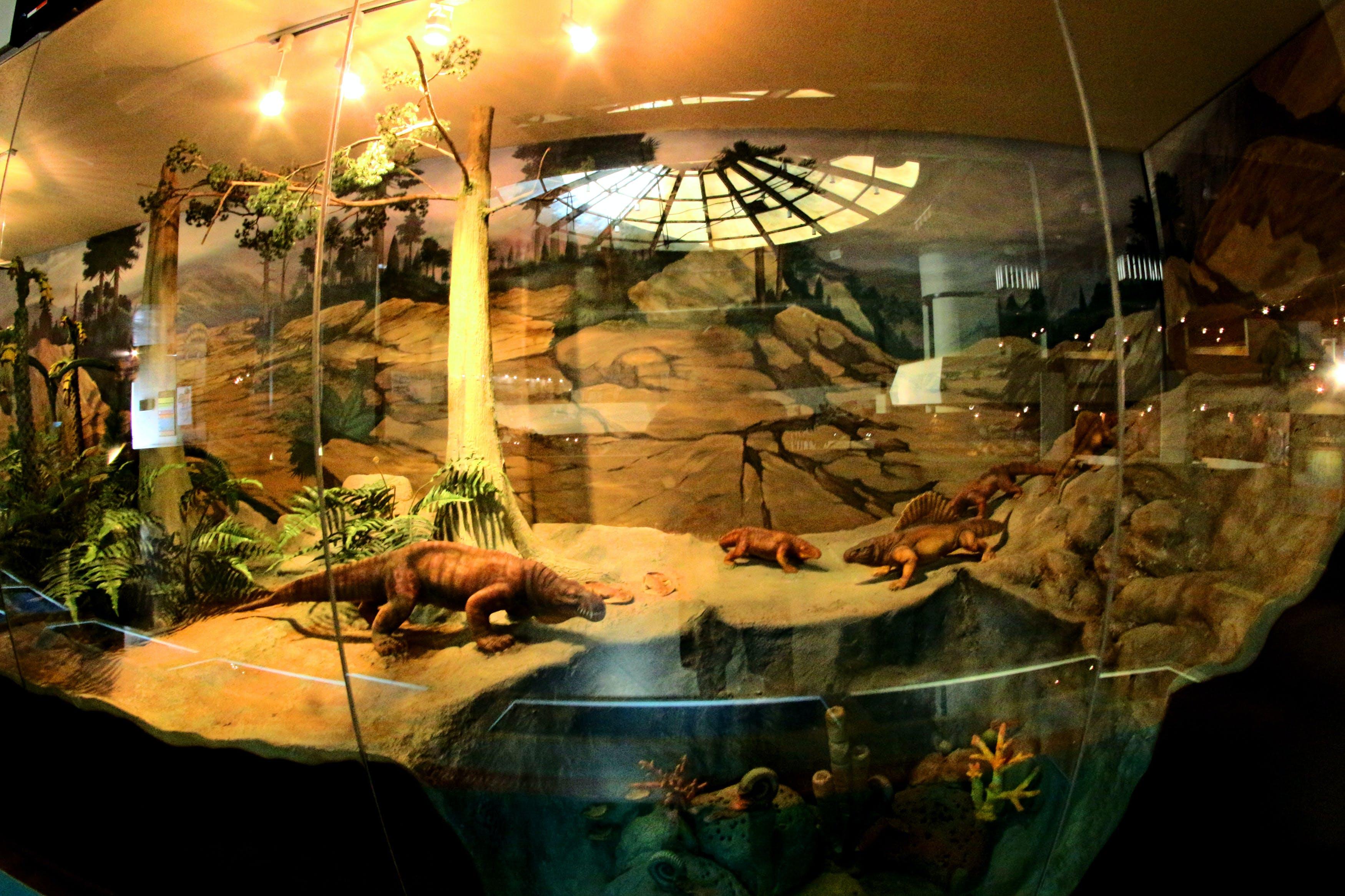 Free stock photo of albertasaurus, ancient, animal, barbed