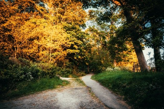 Pathway Surrounded by Trees