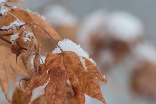 Gratis arkivbilde med årstid, farger, forkjølelse, frost