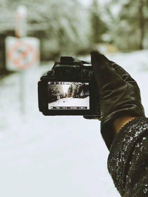 appareil photo numérique, arbres, brouiller