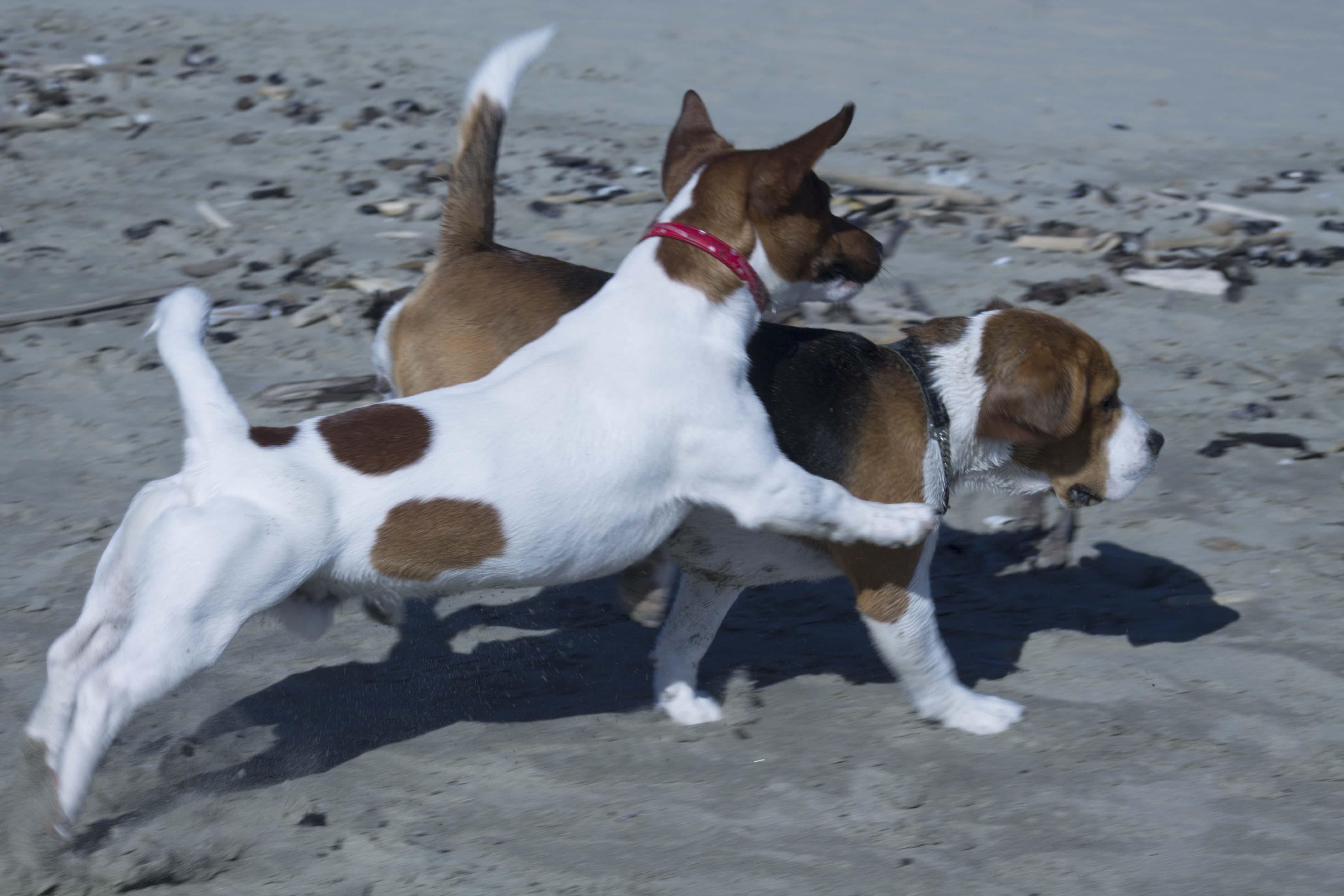 Free stock photo of baby dog, dog, doggy, play