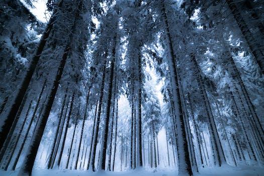 Árboles con nieves