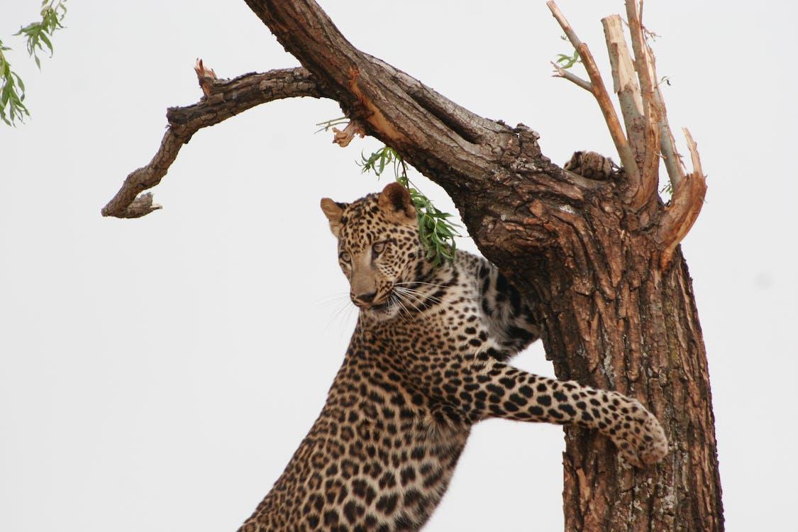 animal, animal sauvage, arbre