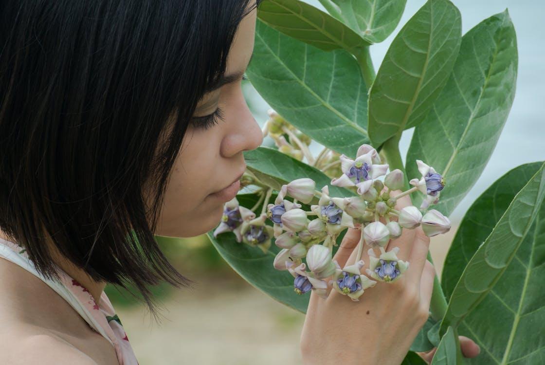 꽃, 단순한, 달콤함