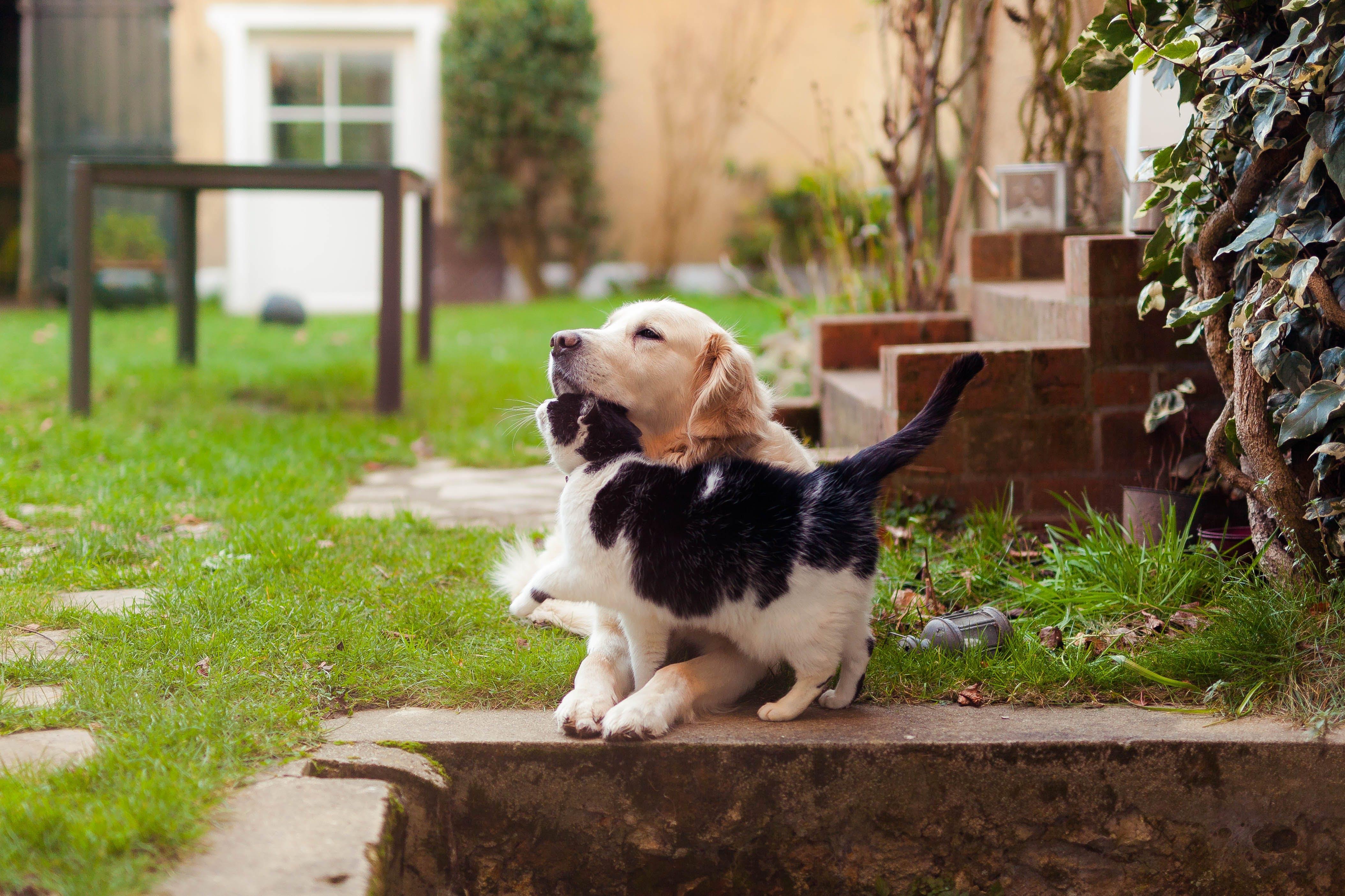Free stock photo of friends, garden, animal, dog