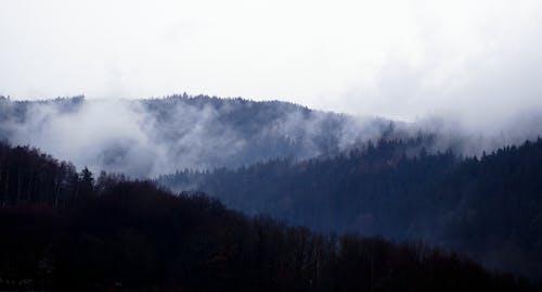 Photos gratuites de arbres, bois, brouillard, brumeux